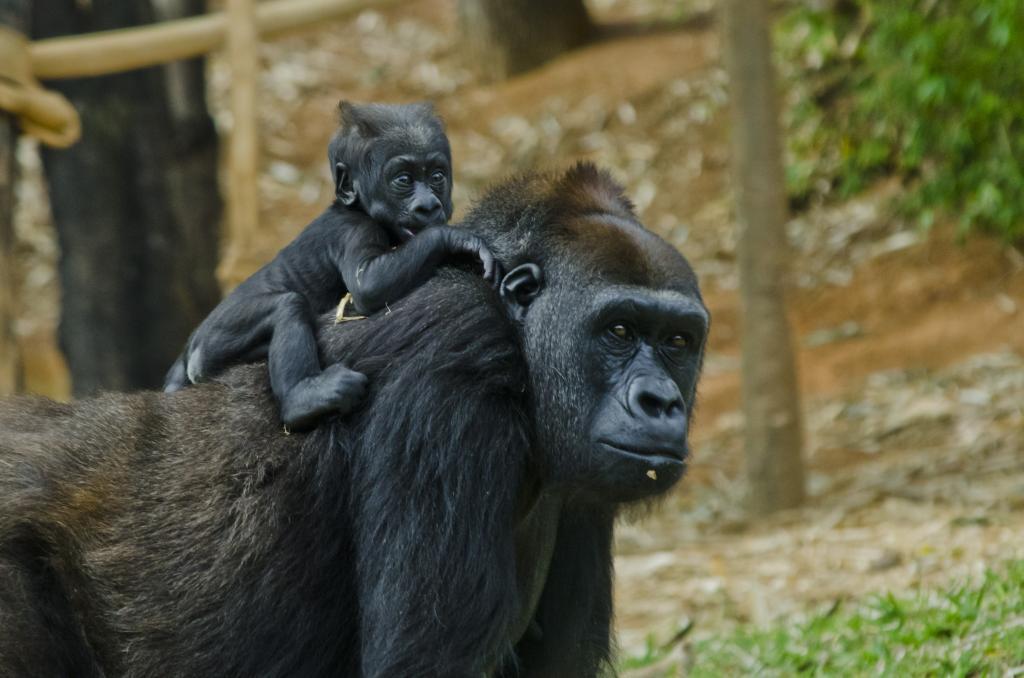 Dia Mundial da Vida Selvagem é celebrado com atividade on-line